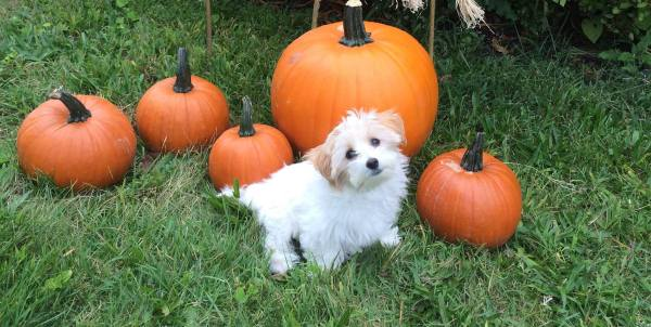 tina-pumpkin-patch